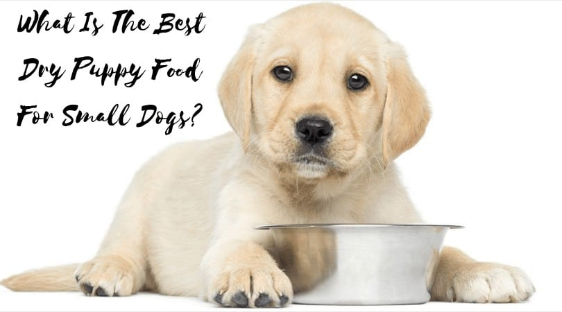 best-dry-puppy-food-for-small-dogs