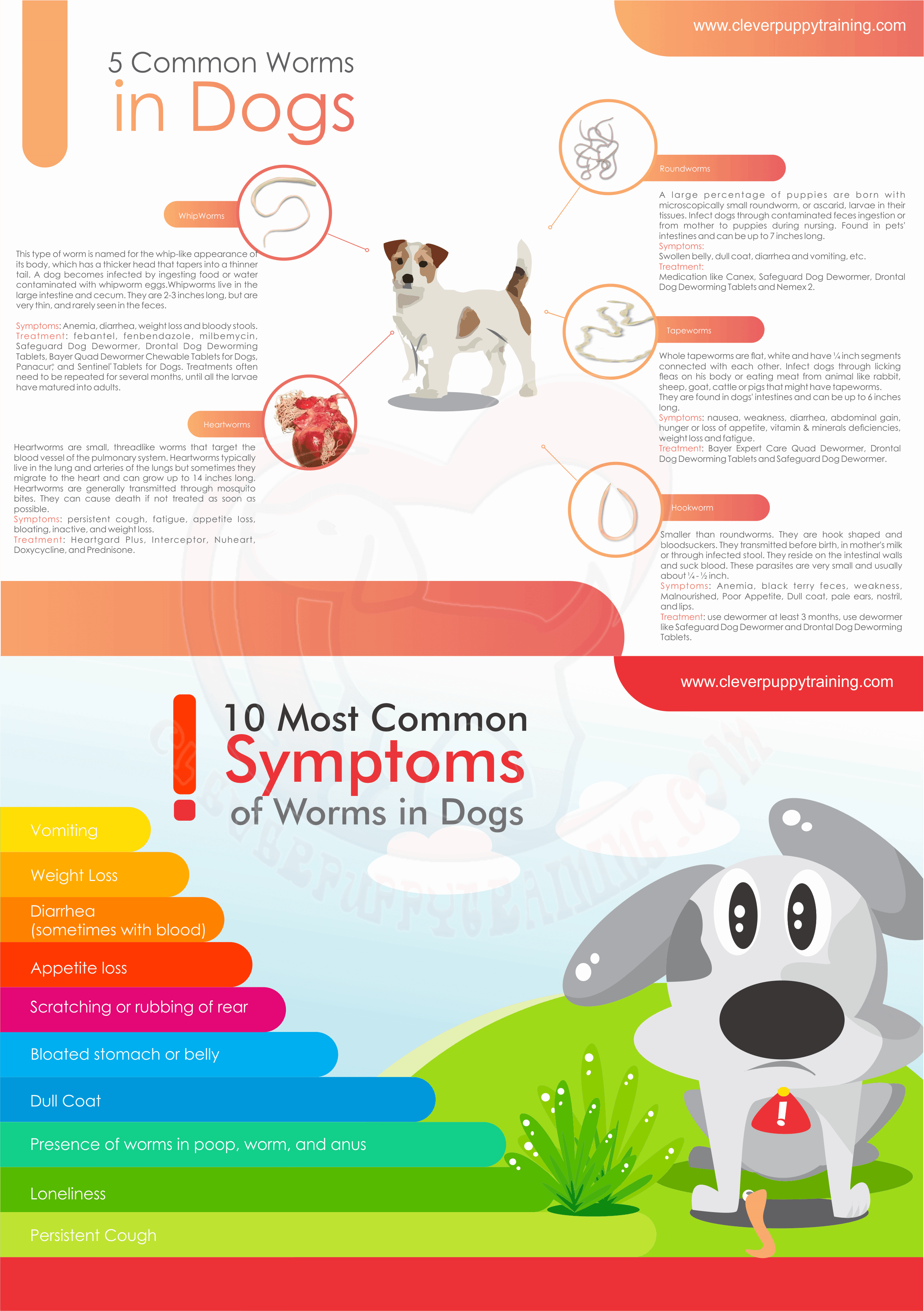 Worms in Dogs - Types of worms and Symptoms