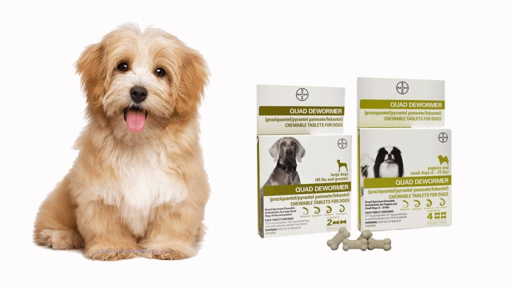 Bayer Dog Dewormer