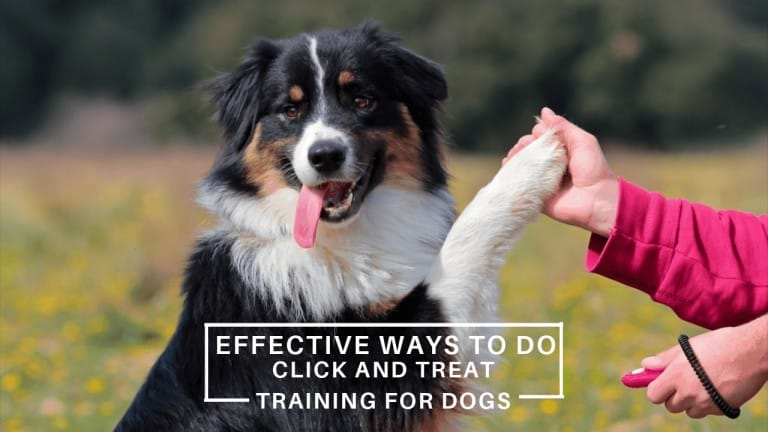 click and treat training for dogs