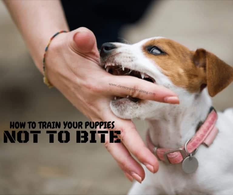 train-puppies-not-to-bite