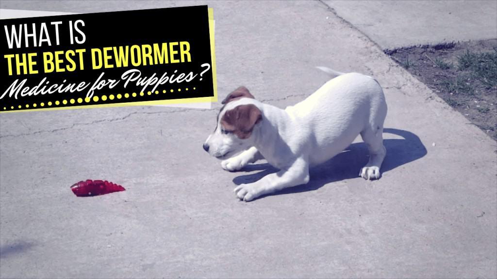 Dewormer Medicine for Puppies