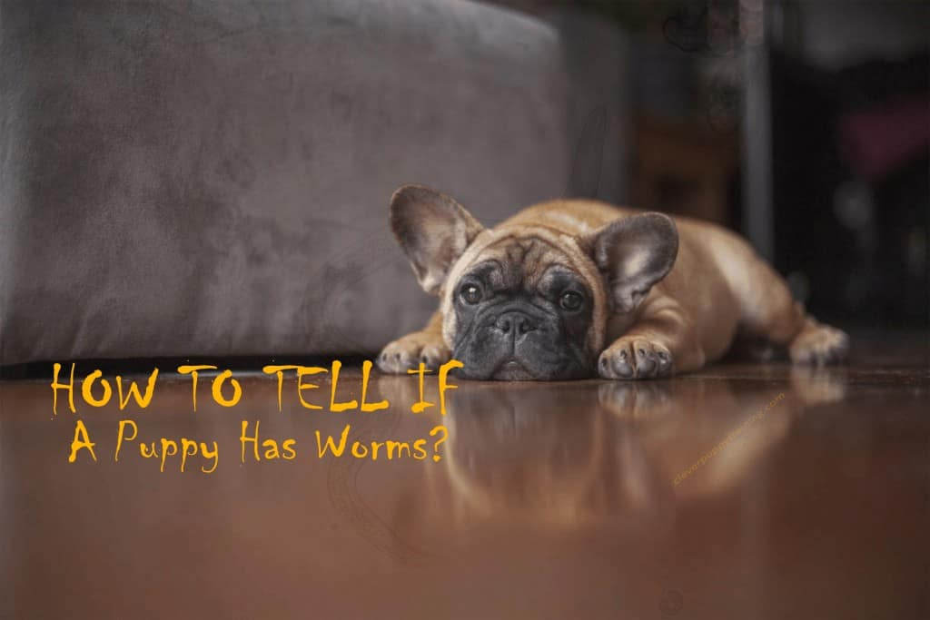 how-to-tell-if-a-puppy-has-worms