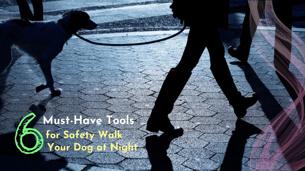 walk your dog at night