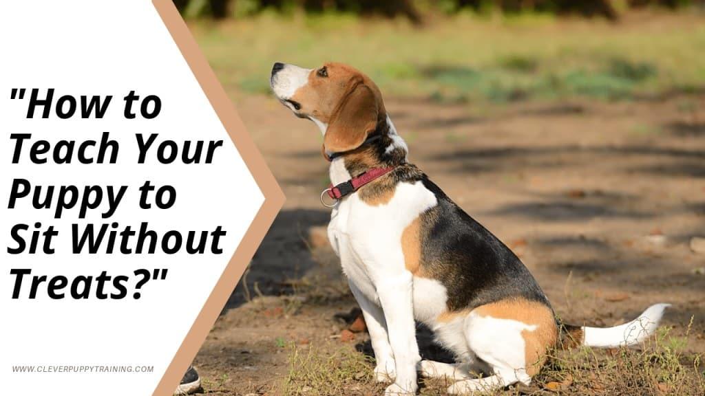 Teach Your Puppy to Sit
