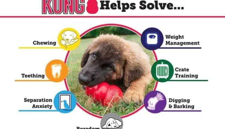 KONG Extreme Canine Toy helps separation anxiety