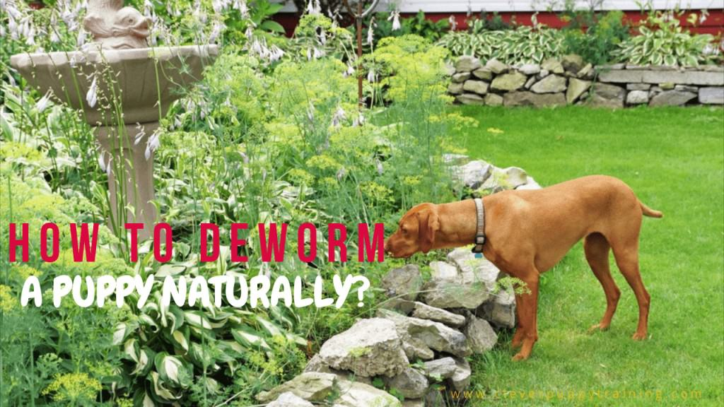 how to deworm a puppy naturally