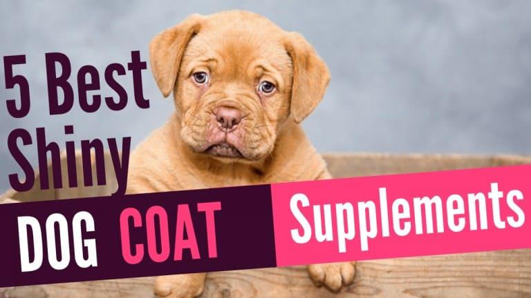 shiny dog coat supplements