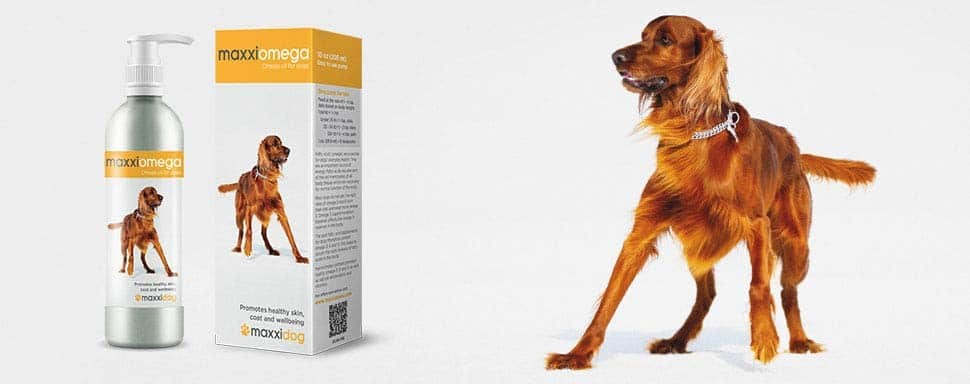 Fish Oil for Dog