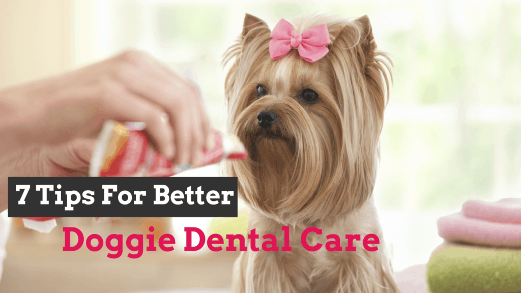 doggie-dental-care
