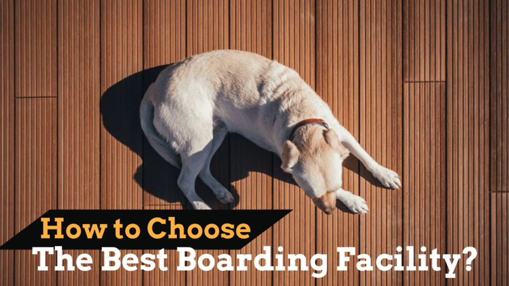 best-boarding-facility