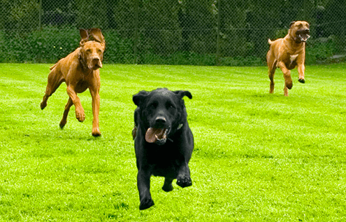 pet-running