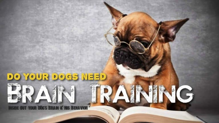 Dogs Brain Training