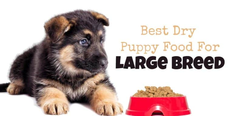 dry puppy food for large breed