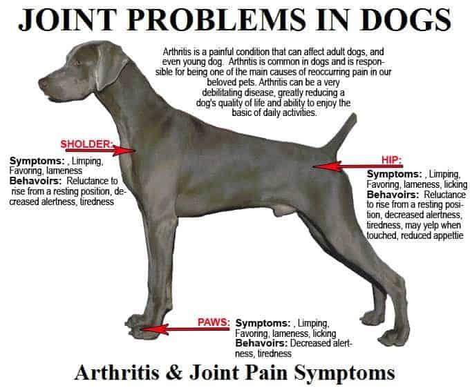 best orthopedic dog bed arthritis