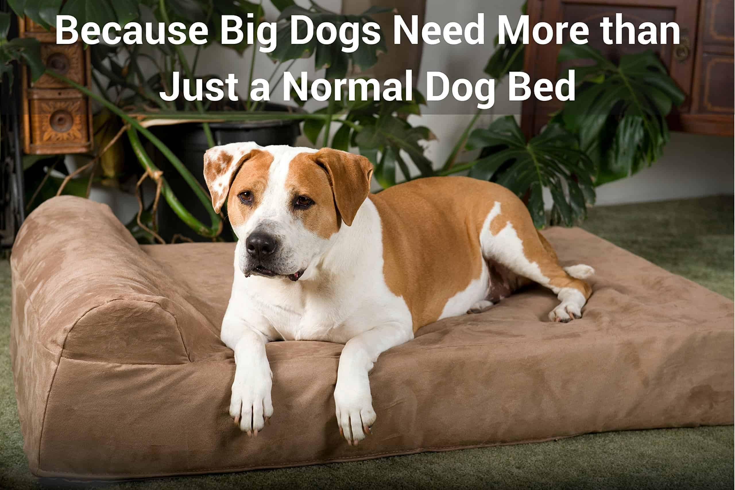 Best Orthopedic Dog Beds For All Size