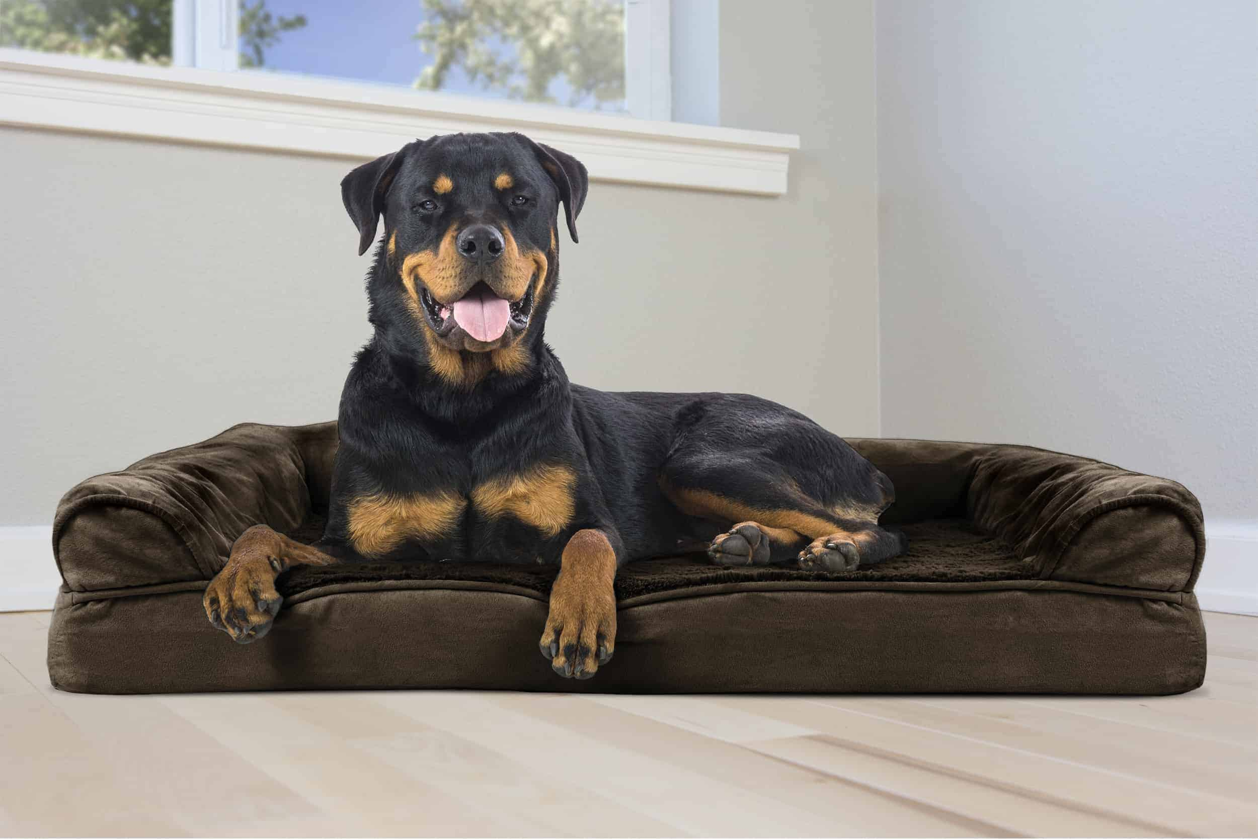 low-budget-orthopedic dog bed