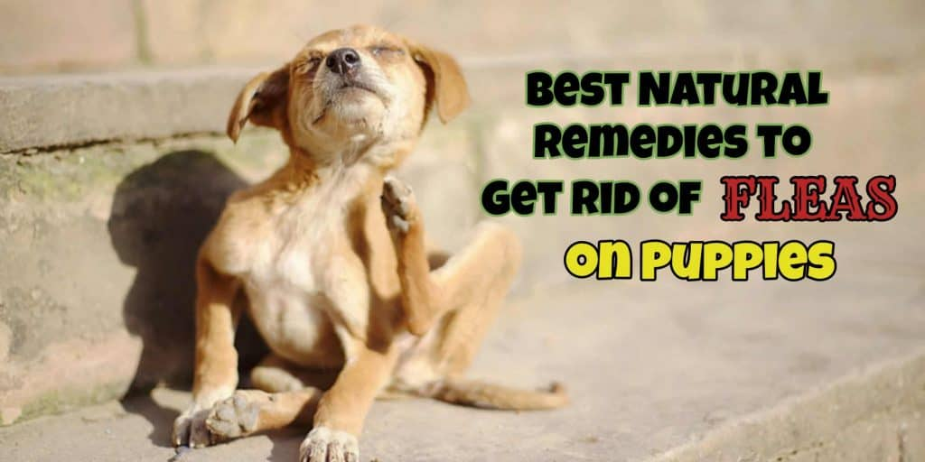 natural-remedies-to-get-rid-of-fleas
