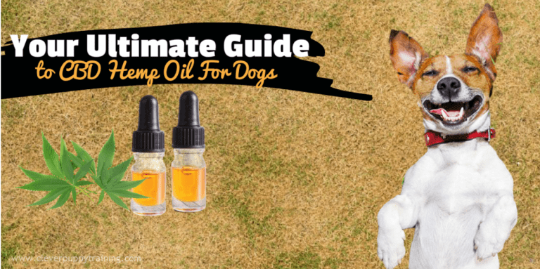 cbd-hemp-oil-for-dogs