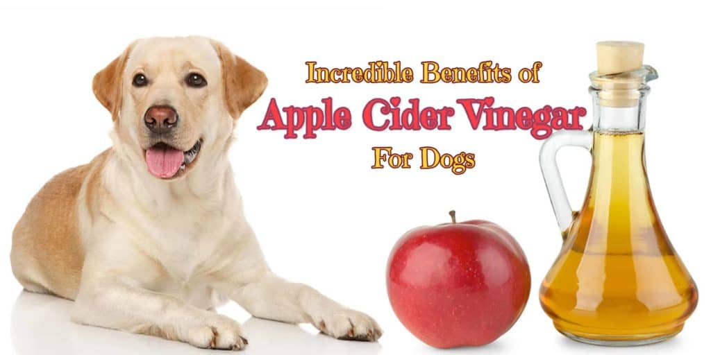 benefits-of-apple-cider-vinegar-for-dogs