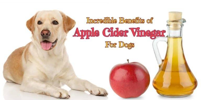 benefits-of-apple-cider-vinegar-for-dogs