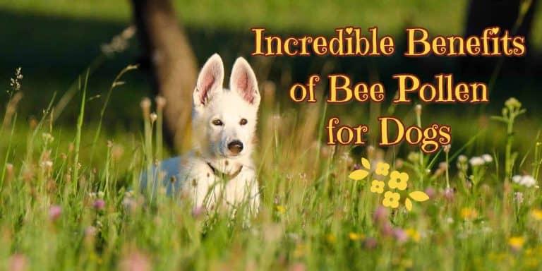 benefit-of-bee-pollen