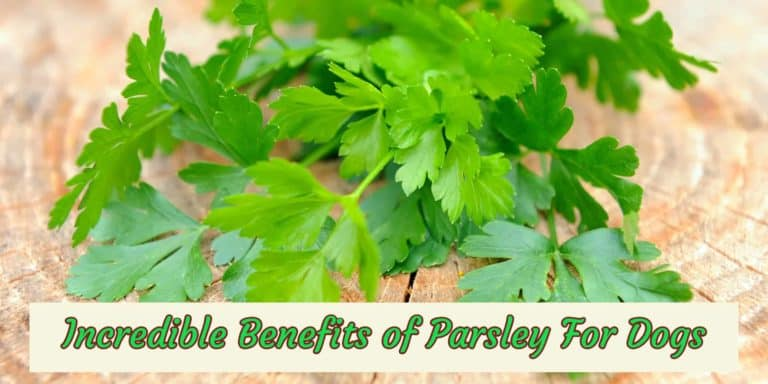benefit-of-parsley-for-dog