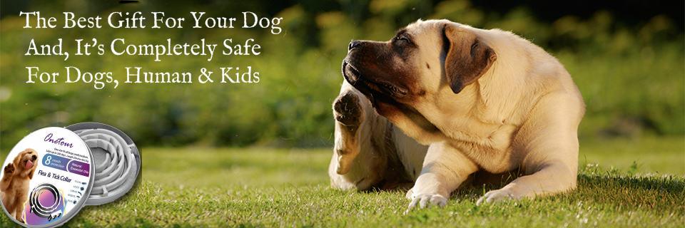 premium-fleas-collar-for-dog