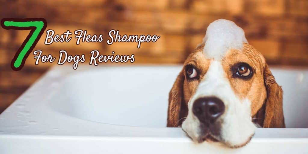 best-fleas-shampoo-for-dogs