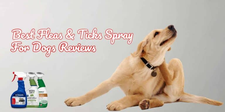 best-fleas-and-ticks-sprays-for-dogs