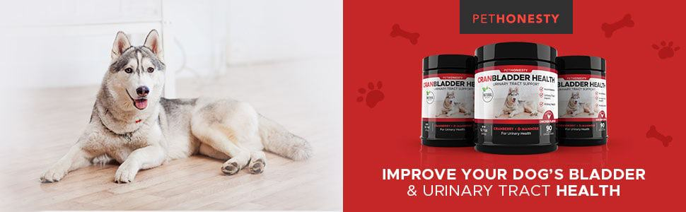 PetHonesty-cranberry-supplements-for-dogs