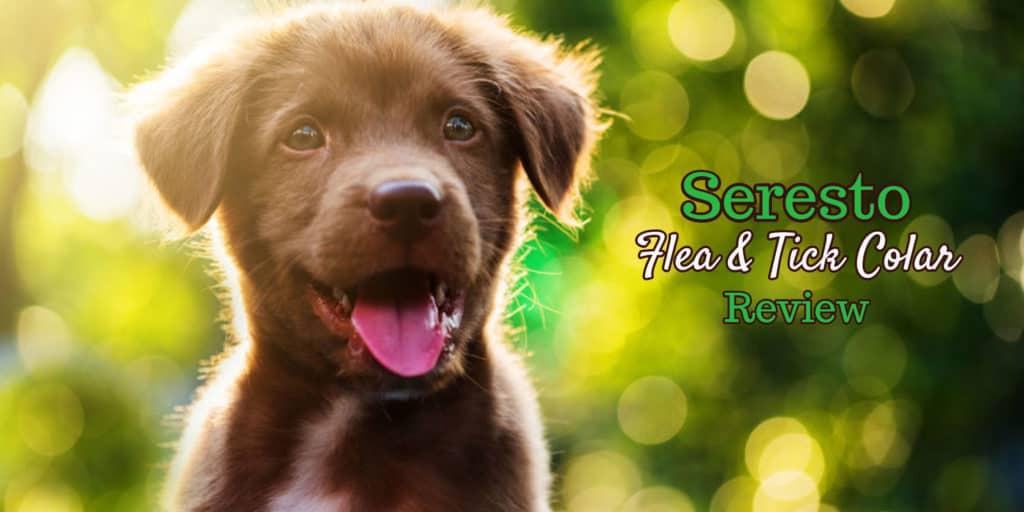 seresto-flea-collar-for-dogs-review