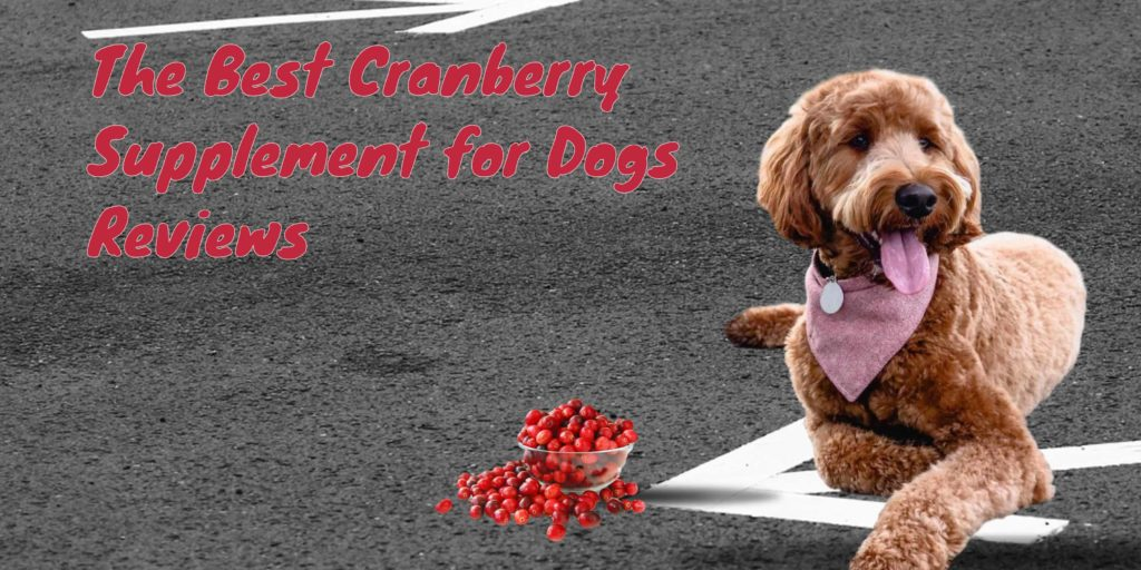 Best Cranberry Supplement For Dogs