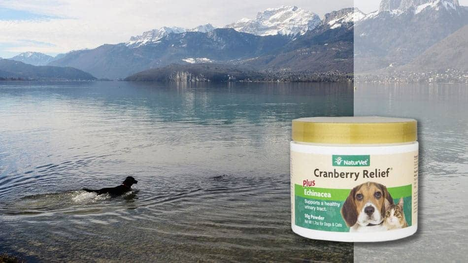 naturvet-cranberry-UTI-relief-for-dogs