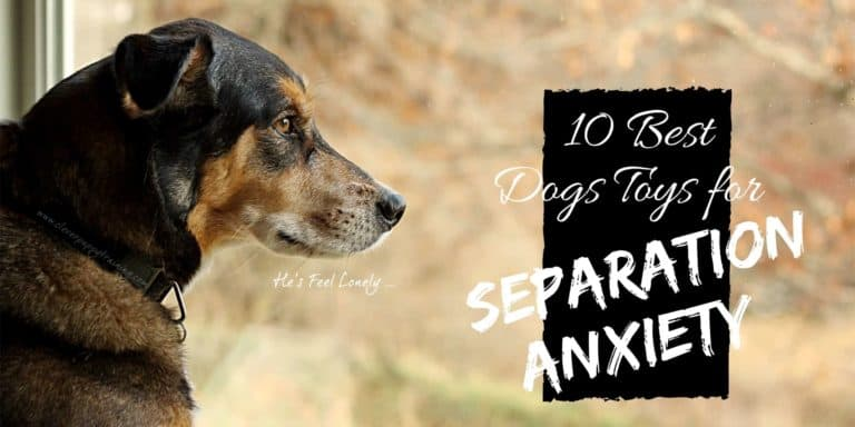 separation anxiety toy for dog