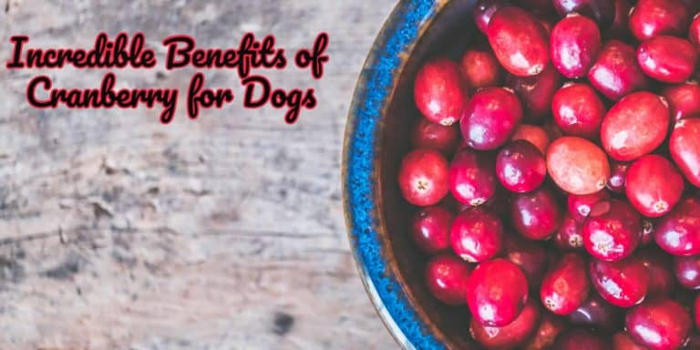 benefit of cranberry for dog