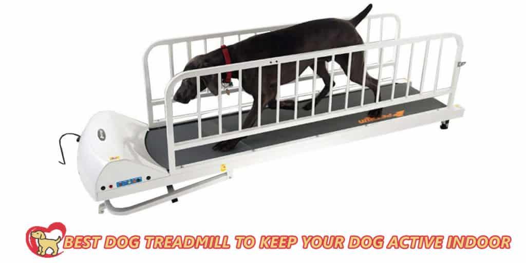 Best-dog-treadmill