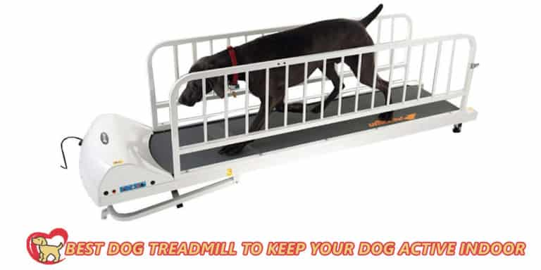 Best-dog-treadmill