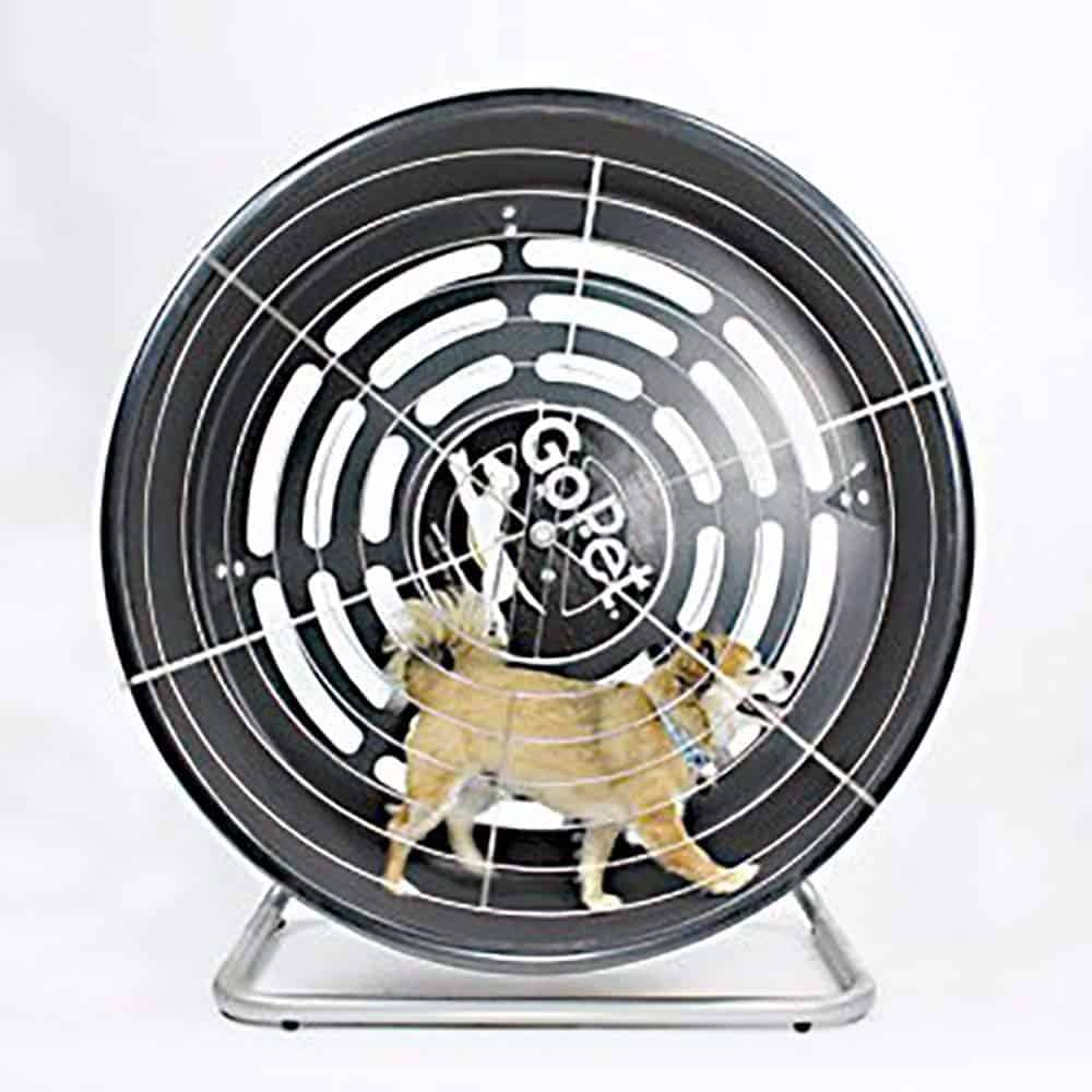 GoPet Wheel Tread - best dog treadmill