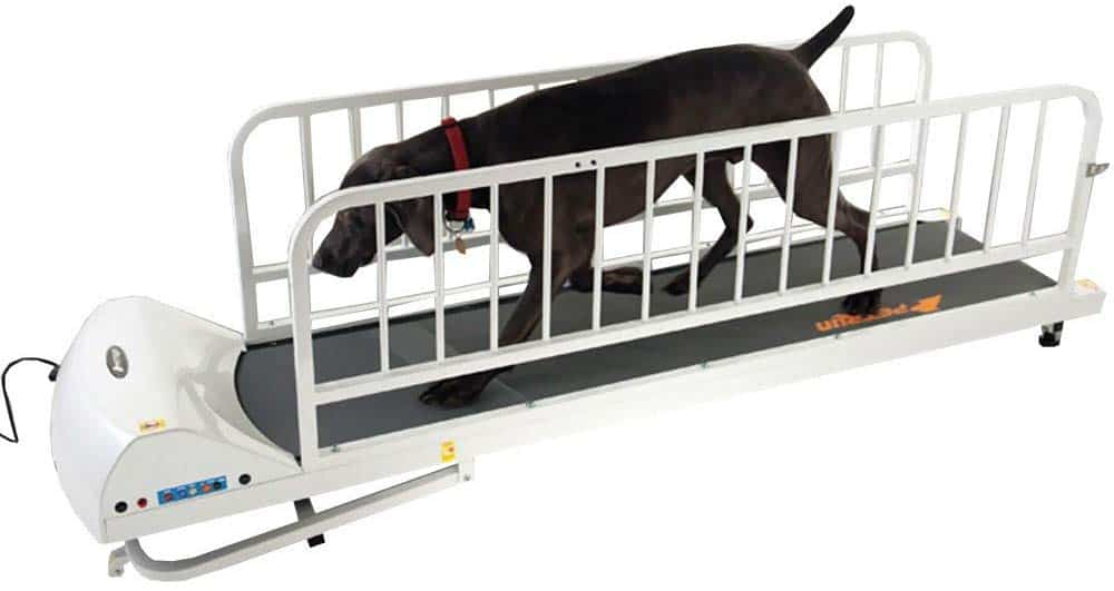 GoPet best dog treadmill