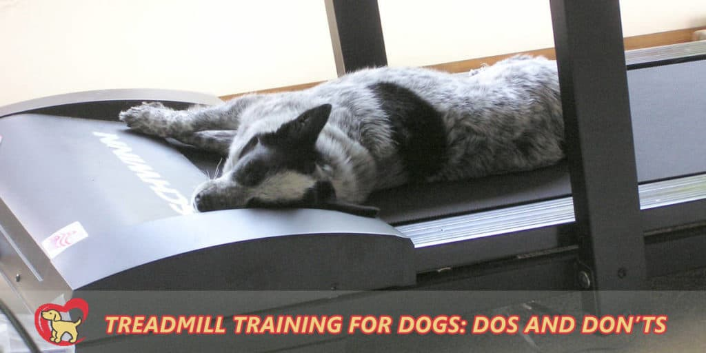 Treadmill-training-for-dogs