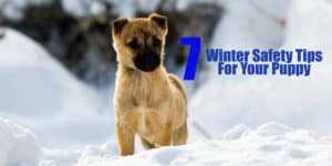 dog-winter-safety-tips