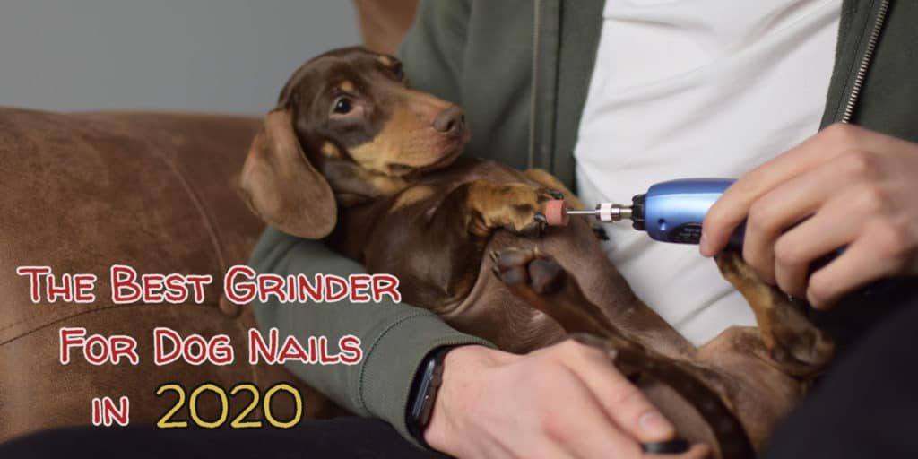 best-grinder-for-dog-nails
