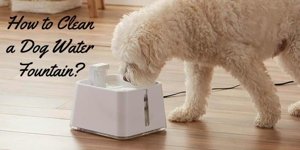 cleaning-dog-water-fountain