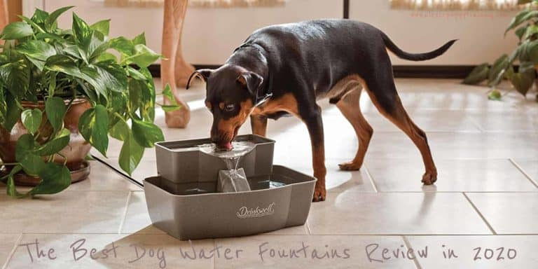 best dog water fountains