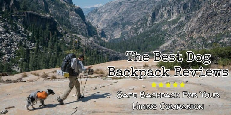 best backpack for your dog