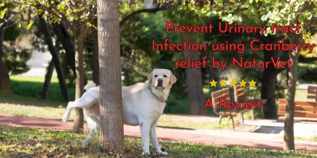 Prevent Urinary tract Infection using Cranberry relief by NaturVet