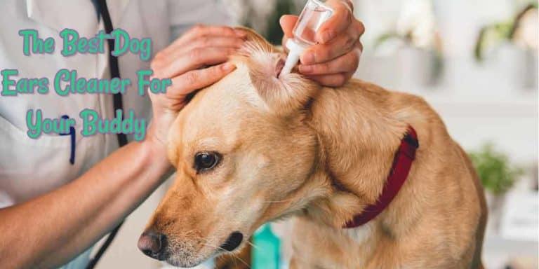 best-dog-ears-cleaner-solution