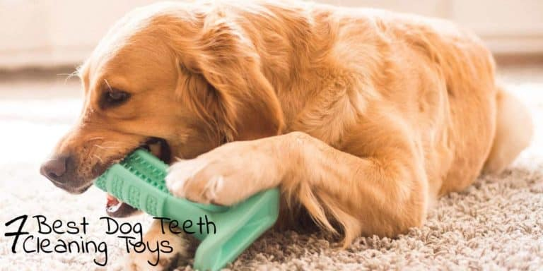 Best Dog Teeth Cleaning Toys