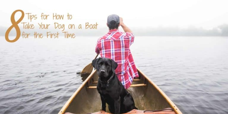 how to get dog on boat